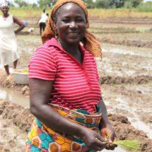 Frauen stärken - Reis säen 1